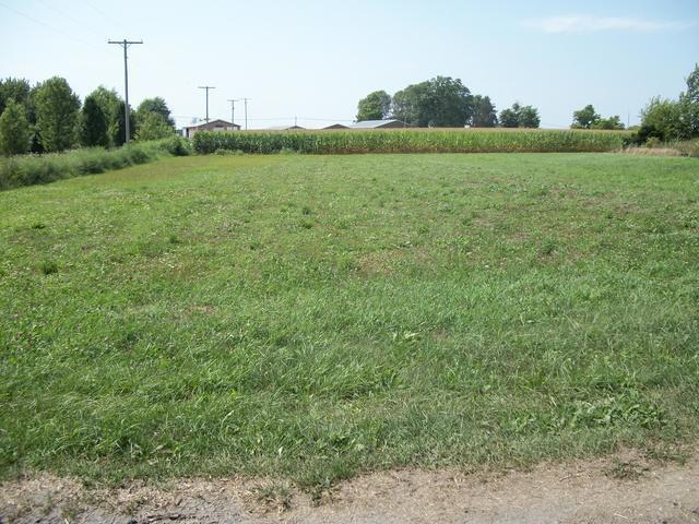 100 Mulberry Street, Loda, IL 60948 (MLS #10045203) :: Ryan Dallas Real Estate