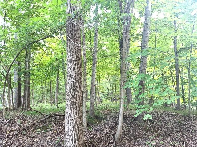 Lot 221 Elm Tree Drive, Varna, IL 61375 (MLS #10056039) :: Touchstone Group
