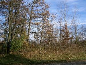 Lot 11 Ramm Woods Drive, Maple Park, IL 60151 (MLS #10063636) :: The Saladino Sells Team