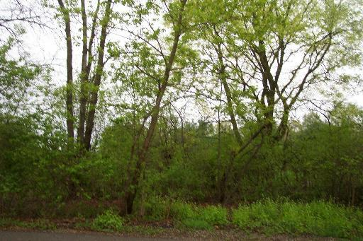 6496 Johnsburg Road, Spring Grove, IL 60081 (MLS #10128323) :: Domain Realty