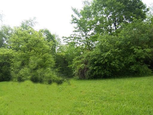 710 Wildwood Drive, Joliet, IL 60431 (MLS #10154325) :: The Wexler Group at Keller Williams Preferred Realty