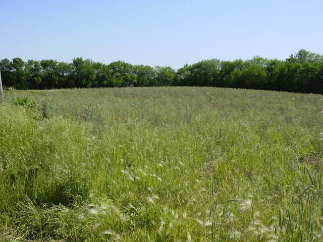 16450 S Cedar Road, Homer Glen, IL 60491 (MLS #10250656) :: The Wexler Group at Keller Williams Preferred Realty