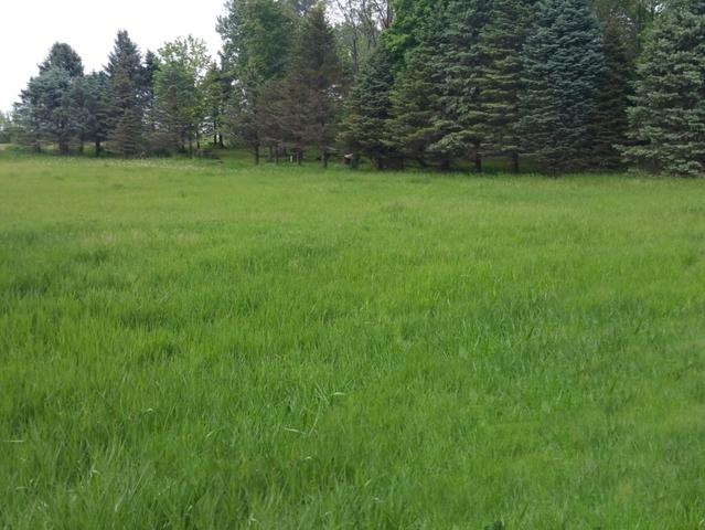 Lot 2 Timberline Drive, Granville, IL 61326 (MLS #10251696) :: Domain Realty