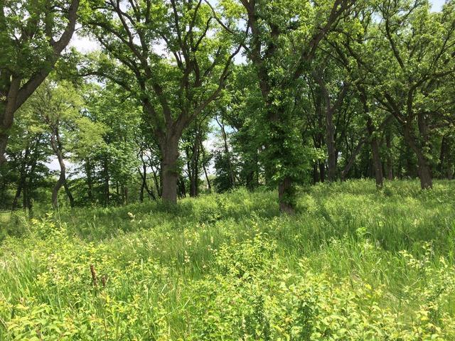 1201 Ridgemoor Trail, Woodstock, IL 60098 (MLS #10321123) :: Berkshire Hathaway HomeServices Snyder Real Estate
