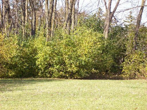 437 Linden Lane, Antioch, IL 60002 (MLS #10340794) :: Century 21 Affiliated