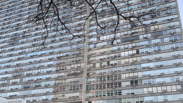4800 S Chicago Beach Drive 213N, Chicago, IL 60615 (MLS #10342921) :: Domain Realty