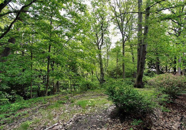 651 Hibbard Road, Winnetka, IL 60093 (MLS #10384163) :: Berkshire Hathaway HomeServices Snyder Real Estate
