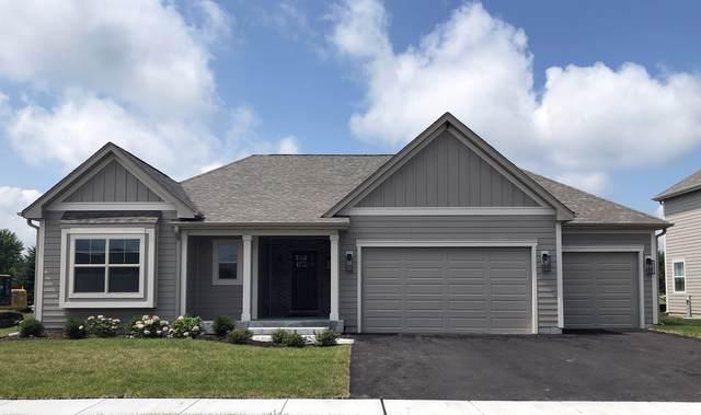 770 Richwood Avenue, Elgin, IL 60124 (MLS #10483690) :: Ani Real Estate