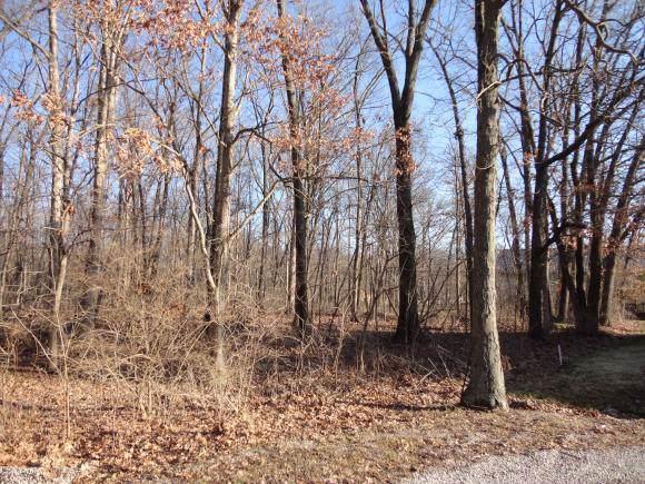 Lot 10 Lithia Lane, SHELBYVILLE, IL 62565 (MLS #10484036) :: John Lyons Real Estate