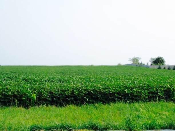 Sec 21 Twp 32N, R 11E, Manteno, IL 60950 (MLS #10491070) :: John Lyons Real Estate