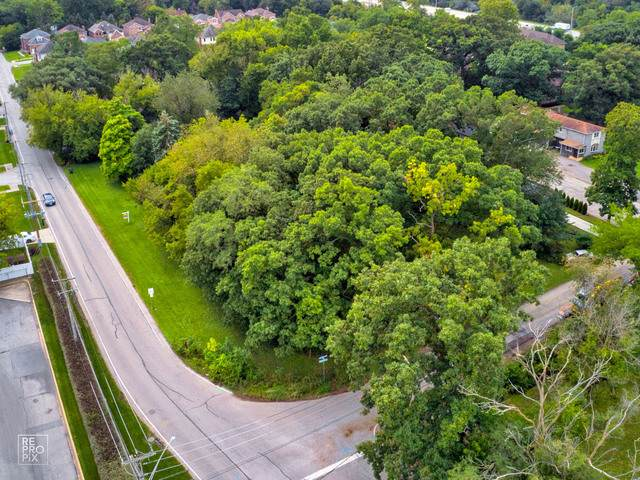 303 Bellaire Avenue, Des Plaines, IL 60016 (MLS #10546540) :: Ani Real Estate