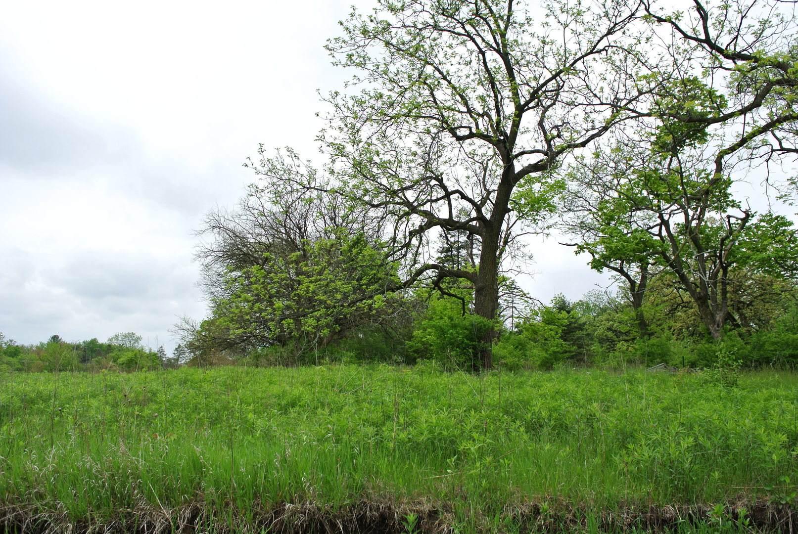 177 Dundee Road, Barrington Hills, IL 60010 (MLS #10722051) :: Littlefield Group