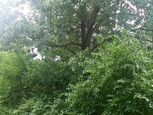 912 N Erickson Drive, Kankakee, IL 60901 (MLS #10860227) :: Ryan Dallas Real Estate
