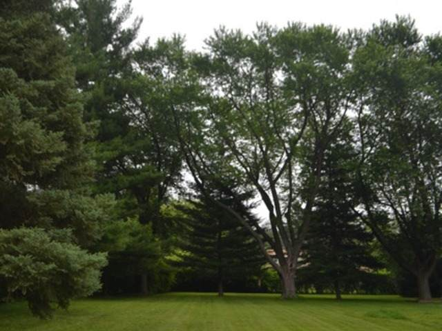 Lot 371 S Circle Avenue, Port Barrington, IL 60010 (MLS #10915229) :: O'Neil Property Group