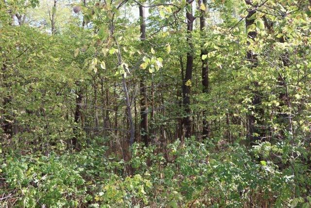 0 Creek Ridge Drive, Dixon, IL 61021 (MLS #11252430) :: Ryan Dallas Real Estate
