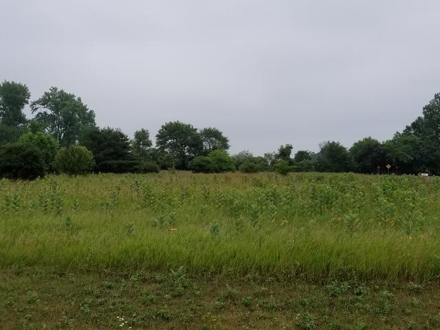 Lot 19 Highland Estates, St. Anne, IL 60964 (MLS #09988958) :: Ani Real Estate