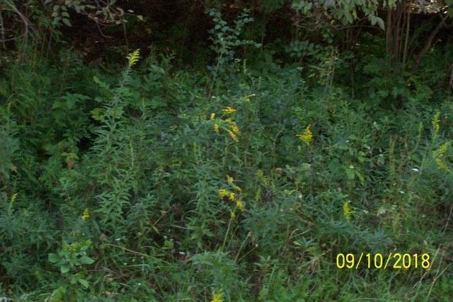 212 Lake Tunderbird Drive, Putnam, IL 61560 (MLS #10081755) :: The Saladino Sells Team