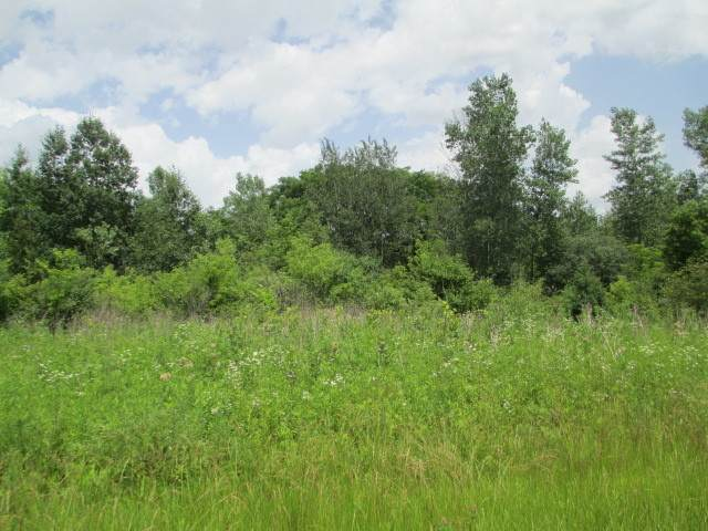LOT 21 Orchard Valley Drive, Mchenry, IL 60050 (MLS #10760693) :: Janet Jurich