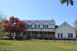 208 Maryland Avenue, Pasadena, MD 21122 (#AA9952198) :: Pearson Smith Realty