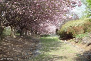 6905 Clifton Road, Clifton, VA 20124 (#FX9945552) :: Pearson Smith Realty