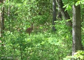 Swan Woods Road, Rhoadesville, VA 22542 (#OR9914912) :: Pearson Smith Realty