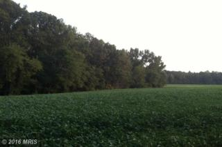 Ivory/Black Lane, Fredericksburg, VA 22408 (#SP8735734) :: Pearson Smith Realty