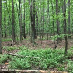 11401 Park Farms Lane, Locust Grove, VA 22508 (#SP9694854) :: Pearson Smith Realty
