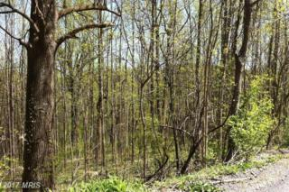 Orchard Tree Drive, Front Royal, VA 22630 (#WR8667069) :: Pearson Smith Realty