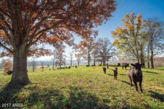 1580 Ellerslie Road, Berryville, VA 22611 (#CL9620741) :: Pearson Smith Realty