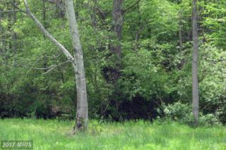 Red Leaf Lane, Culpeper, VA 22701 (#CU8274525) :: Pearson Smith Realty