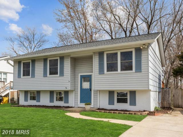 8247 Rupert Road S, Millersville, MD 21108 (#AA10240170) :: Dart Homes