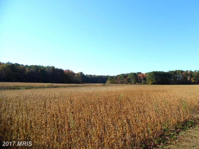 5012 Aireys Road, Cambridge, MD 21613 (MLS #DO10123003) :: RE/MAX Coast and Country