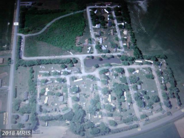 6061 Flamingo Road, Rhodesdale, MD 21659 (#DO10212904) :: Bob Lucido Team of Keller Williams Integrity
