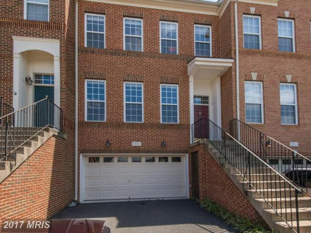 25142 Pennywort Terrace, Aldie, VA 20105 (#LO10034779) :: The Greg Wells Team