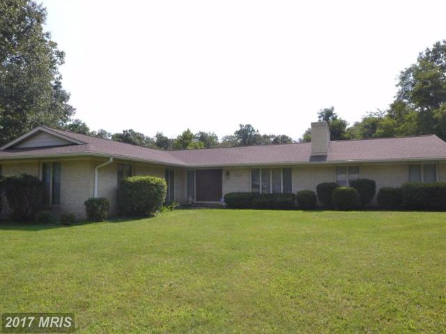 20121 Youngs Cliff Road, Sterling, VA 20165 (#LO10048893) :: Pearson Smith Realty