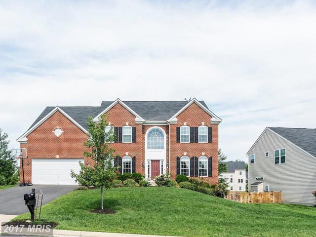 41586 Bostonian Place, Aldie, VA 20105 (#LO10084916) :: The Cruz Group