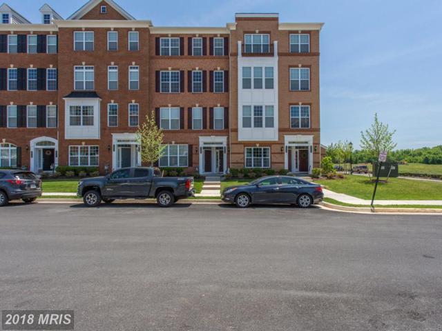 23548 Belvoir Woods Terrace, Ashburn, VA 20148 (#LO10252296) :: The Putnam Group
