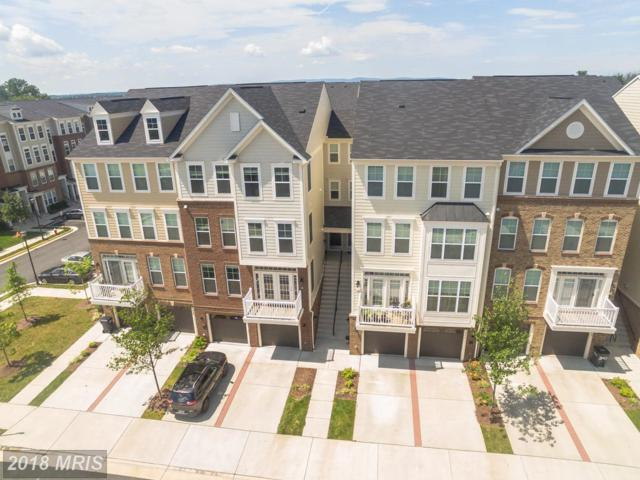 25223 Briargate Terrace, Chantilly, VA 20152 (#LO10322250) :: RE/MAX Executives