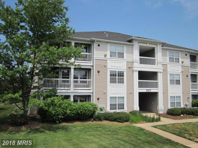 8079 Lacy Drive #201, Manassas, VA 20109 (#PW10240297) :: The Withrow Group at Long & Foster