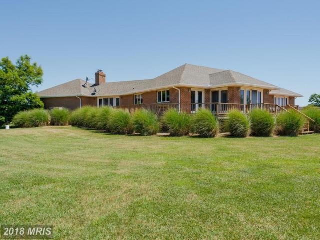 224 Mallard Drive, Centreville, MD 21617 (#QA10299577) :: Blackwell Real Estate