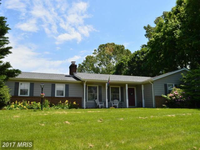 19203 Sycamore Lane, Culpeper, VA 22701 (#CU9944521) :: LoCoMusings