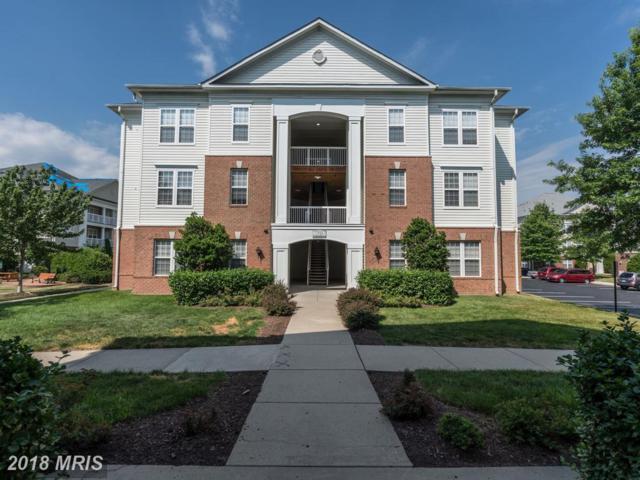 22687 Blue Elder Terrace #202, Ashburn, VA 20148 (#LO10295891) :: RE/MAX Executives