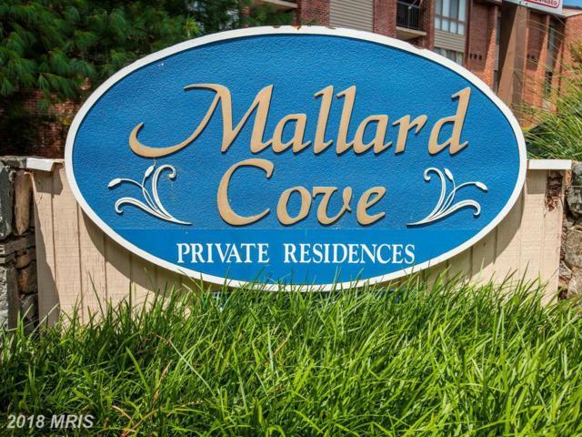 8010 Needwood Road #104, Derwood, MD 20855 (#MC10306268) :: RE/MAX Success