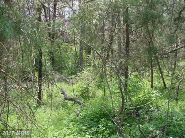 Long View Drive, Luray, VA 22835 (#PA9918363) :: Pearson Smith Realty