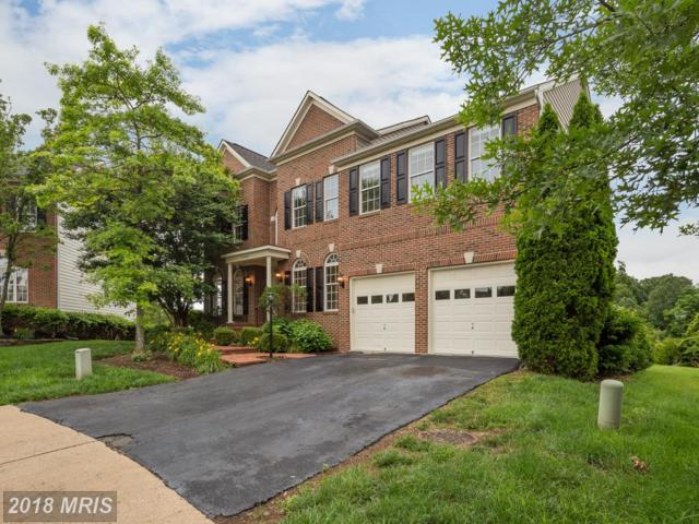 5704 Macintosh Loop, Haymarket, VA 20169 (#PW10260337) :: The Withrow Group at Long & Foster