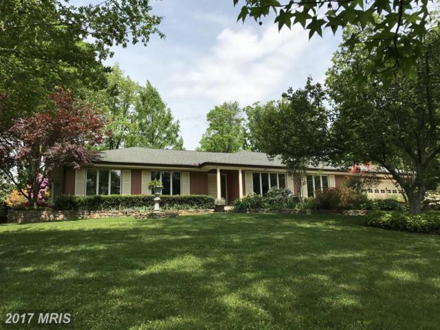 149 Stuart Drive, Winchester, VA 22602 (#FV9890204) :: Pearson Smith Realty