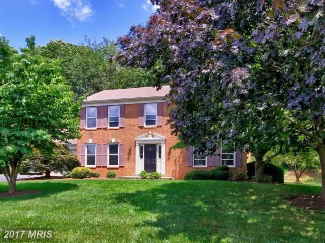 11778 Hollyview Drive, Great Falls, VA 22066 (#FX9991599) :: Pearson Smith Realty