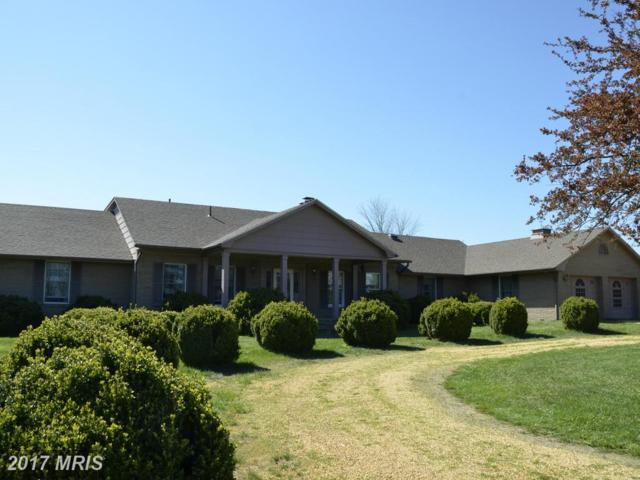 2043 Pleasant View Road, Mount Jackson, VA 22842 (#SH9635626) :: LoCoMusings