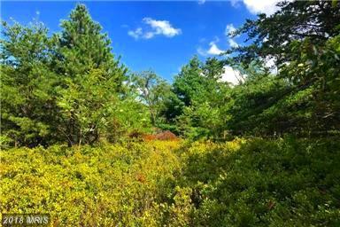 Doe Garden Road, Wardensville, WV 26851 (#HS9011326) :: Fine Nest Realty Group