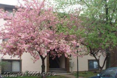 6065 Majors Lane 2 H8, Columbia, MD 21045 (#HW10148454) :: The Gus Anthony Team